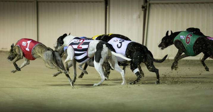 Engineering A Safer Future For Greyhounds