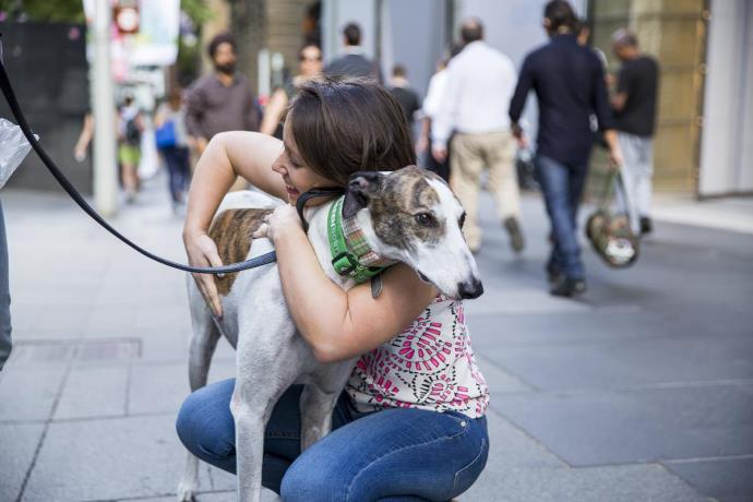 Greyhounds As Pets Hosts Successful Adoption Day