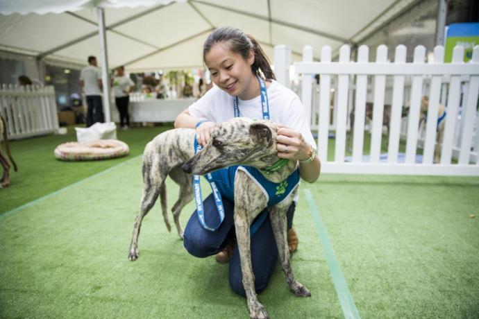 Greyhounds As Pets Lowers Entry Fee