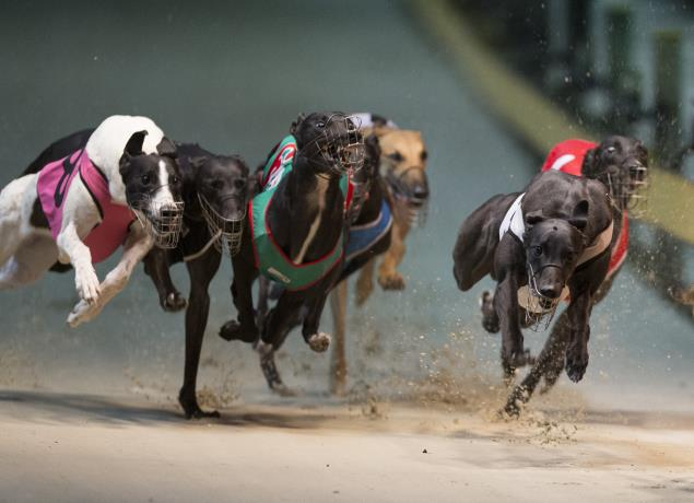 First Greyhound Racing Injury Report Now Available